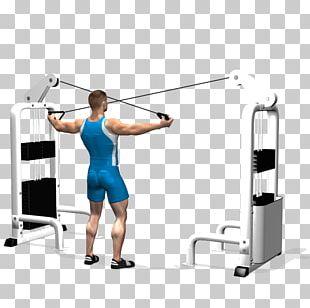 Shoulder Rear Delt Raise Physical Fitness Exercise Deltoid Muscle PNG