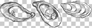 Oyster Drawing Crassostrea Line Art Sketch PNG