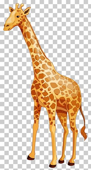 Baby Giraffes Cartoon Northern Giraffe PNG