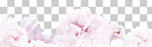 Floral Design Spring Cherry Blossom Cut Flowers PNG