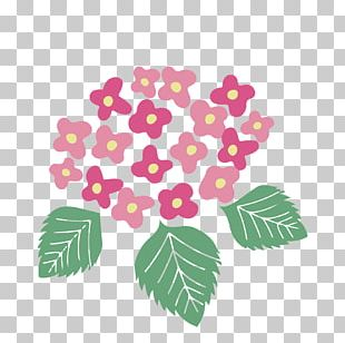 Illustration French Hydrangea Flower Petal East Asian Rainy Season PNG