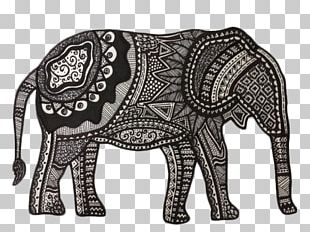 Indian Elephant African Elephant Drawing PNG