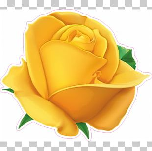 Rose Stock Photography Flower PNG