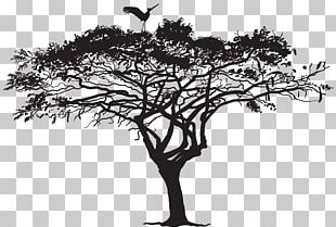 Bird Tree Silhouette Flock PNG