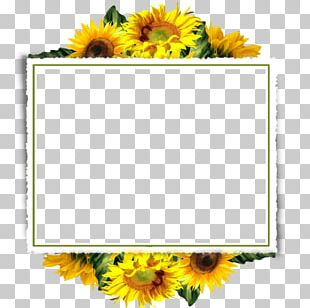 Frame Flower Arranging Rectangle PNG
