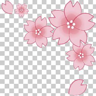 Cherry Blossom Graduation Ceremony 花吹雪 PNG