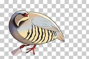 Bird Hatoful Boyfriend Phasianidae PNG