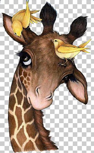 Northern Giraffe Painting Drawing Animal Canvas PNG