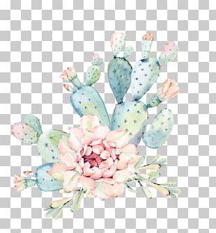 Cactaceae Watercolor Painting Succulent Plant Euclidean PNG