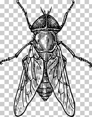 How To Draw Insects Bee Drawing Line Art PNG