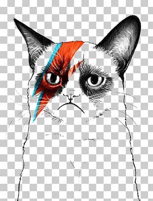 Grumpy Cat Musician Artist PNG