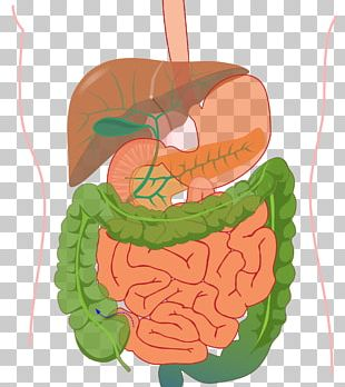 Human Body Organ System Gastrointestinal Tract Human Digestive System PNG