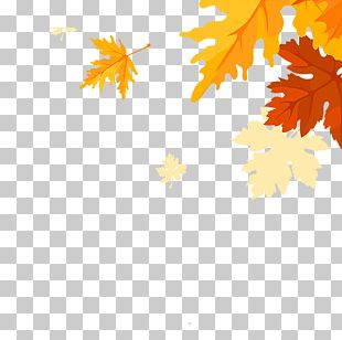 Maple Leaves Falling PNG