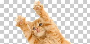Kitten Cat Springing PNG