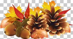 Autumn Encapsulated PostScript PNG