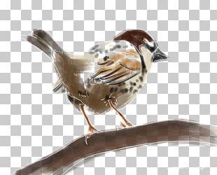 House Sparrow Bird Spanish Sparrow Moineau Atlantic Canary PNG