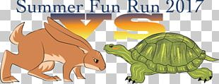 Tortoise Hendricks County Parks & Recreation YMCA Wildlife Turtle PNG
