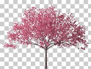 Cherry Blossom Tree Branch PNG