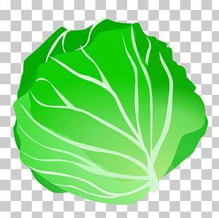 Vegetable Lettuce Fruit PNG
