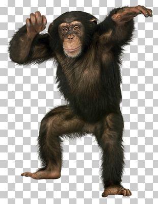 Common Chimpanzee Bonobo Monkey Ape Bornean Orangutan PNG