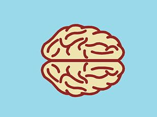 Health YouTube Mind Brain Emotion PNG