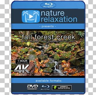 4K Resolution Ultra-high-definition Television 1080p Display Resolution PNG