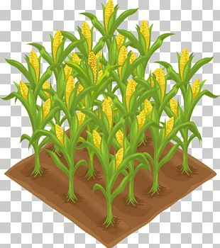Crop Agriculture Farm Field PNG