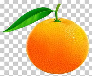 Orange Grapefruit Pomelo PNG