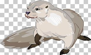 Sea Otter North American River Otter Drawing Cartoon PNG
