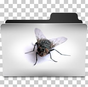 Bee Desktop Computer Icons Desktop Metaphor PNG