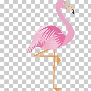 Greater Flamingo Drawing Cartoon PNG