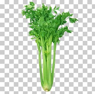 Celery Organic Food Vegetable Grocery Store PNG