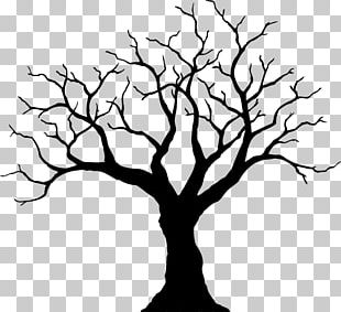 Twig Drawing Tree Line Art PNG