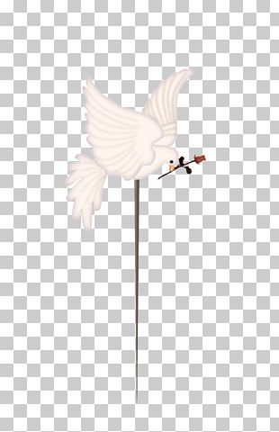 Feather Water Bird Wing Beak PNG