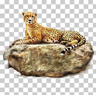 Cheetah Leopard Lion Tiger PNG