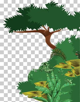 Tropical Rainforest Ecosystem Drawing Evergreen PNG
