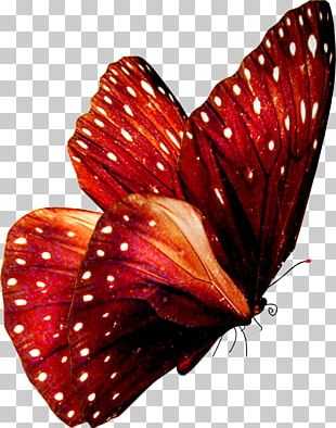 Butterfly Art Stock Photography PNG