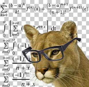 Cougar Lion Cat Felidae Black Panther PNG