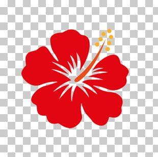 Shoeblackplant Flower Hawaiian Hibiscus PNG