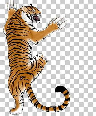 Tiger Big Cat Whiskers Wildlife PNG