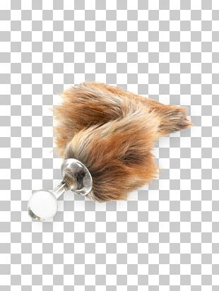 Dog Tail Fur Snout Canidae PNG
