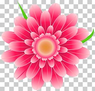 Pink Flowers PNG