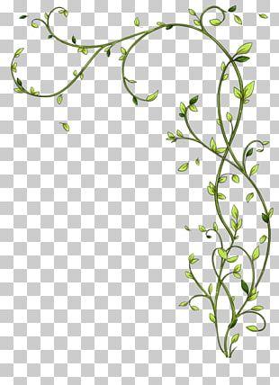 Twig Floral Design Green Plant Stem PNG