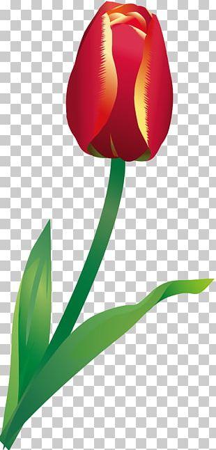 Flowering Plant Tulip Liliaceae Plant Stem PNG