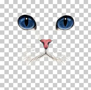 British Shorthair Kitten Dog Tabby Cat PNG