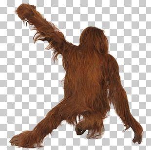 Orangutan ICO Icon PNG