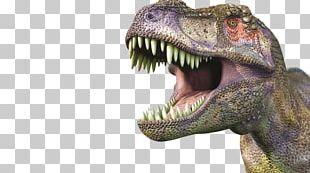 Tyrannosaurus Stegosaurus Dinosaur World Triceratops PNG