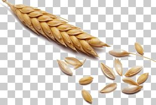 Wheat Cereal Malt Whole Grain PNG