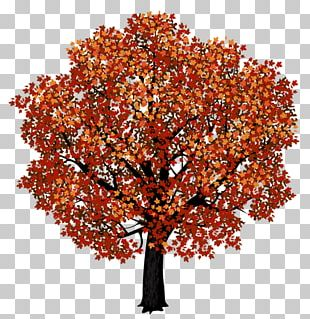 Red Maple Japanese Maple Tree Portable Network Graphics PNG