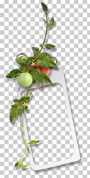 Frames Kitchen Flowerpot RSS PNG
